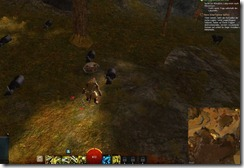 gw2-behind-the-mask-achievement-guide-plains-of-ashford-2
