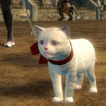 gw2-mini-white-kitten-gemstore-3.jpg