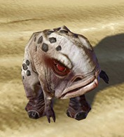 swtor-speckled-blurrg-pet-2