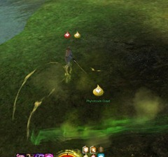 gw2-wurm-phytotoxin-collector-triple-trouble-achievement-guide-2