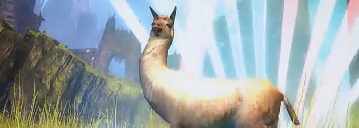 GW2 Llama Finisher and Ready Up Ep11 notes