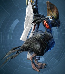 swtor-crested-orokeet-pet-2