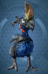 swtor-crested-orokeet-pet