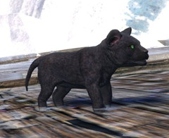 gw2-mini-jaguar-cub-gemstore-2