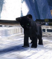 gw2-mini-jaguar-cub-gemstore