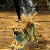 gw2-mini-lion-cub-pet-3