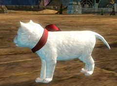 gw2-mini-white-kitten-gemstore-2