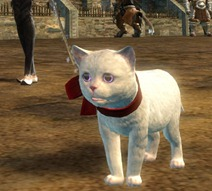 gw2-mini-white-kitten-gemstore-3