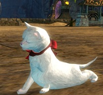 gw2-mini-white-kitten-gemstore