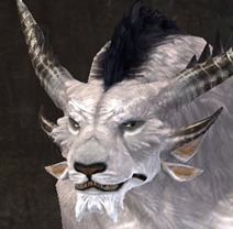 gw2-new-faces-festival-of-four-winds-charr-male-2