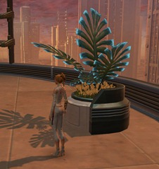 swtor-decorations-potted-plant-manaan-fern-2