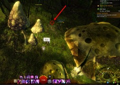gw2-no-masks-left-behind-achievement-guide-tarnished-treetop-5