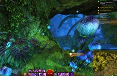 gw2-treetop-retriever-auric-basin-achievement-guide-13