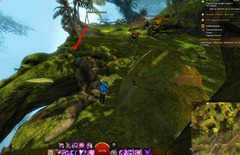 gw2-treetop-retriever-auric-basin-achievement-guide-21