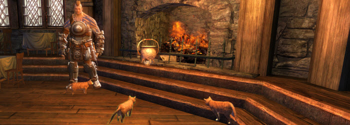 GW2 Frozen Cats and Cat-Made Soup Guide